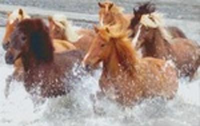 Set Pferde im See