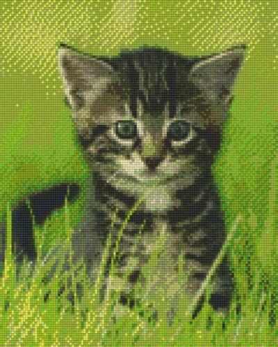 809223_Pixelset-Babykatze