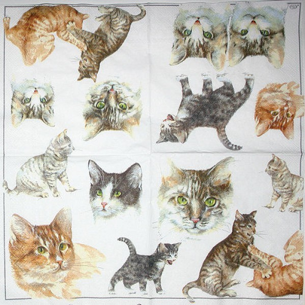 Serviette Cat
