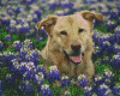 px804137_Pixelset-Hund-zwischen-Blumen