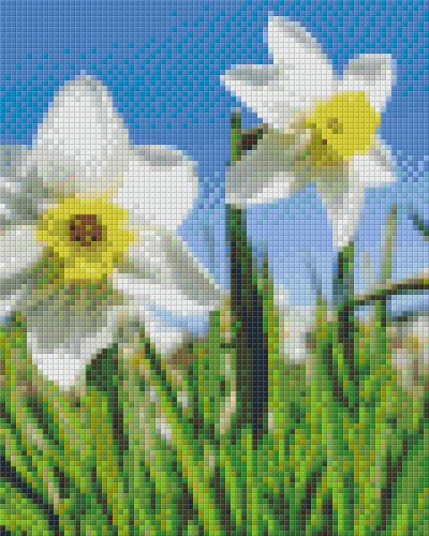 px804478 Pixelset Narzissen weiß