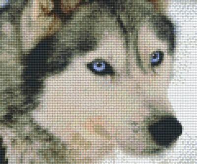 px806145_Pixelset-Husky