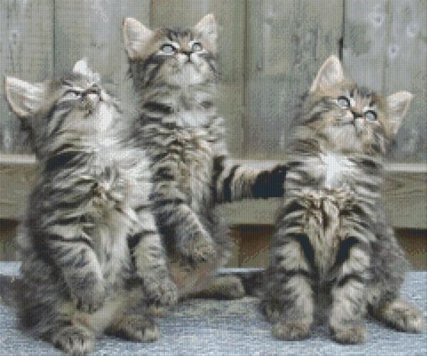 Set Drei Kätzchen 2