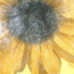 Vlies Sonnenblume