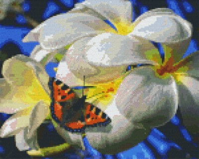 809352_Pixelset-Schmetterling-mit-Frangipani