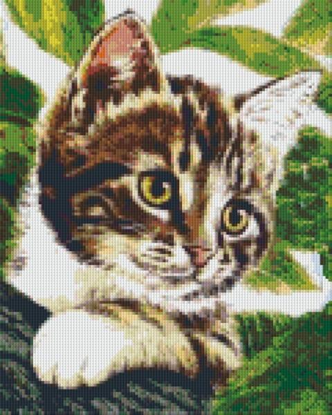 Set Katze 4