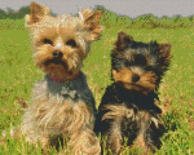 809220_Pixelset-Yorkshire-Terrier