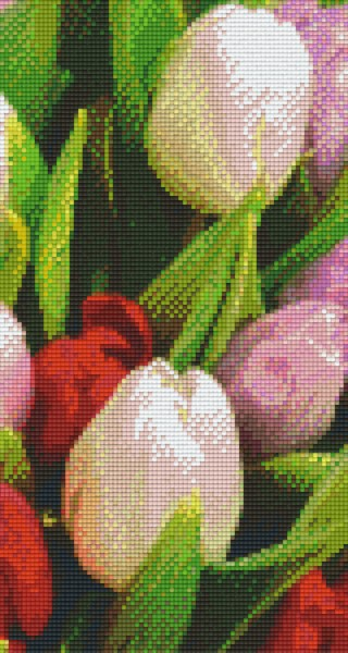 806139 Pixelhobby Set Tulpen 6 mit 6 Platten