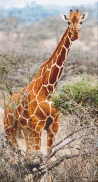 Set Giraffe 2