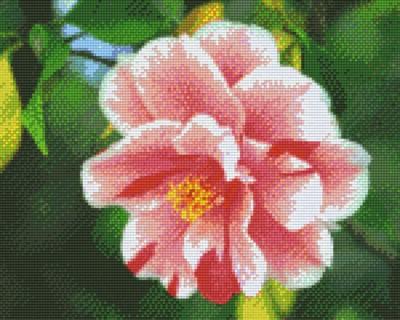 px809364_Pixelset-Blume-2-rosa