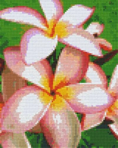 px804273_Pixelset-Blume-Frangipani