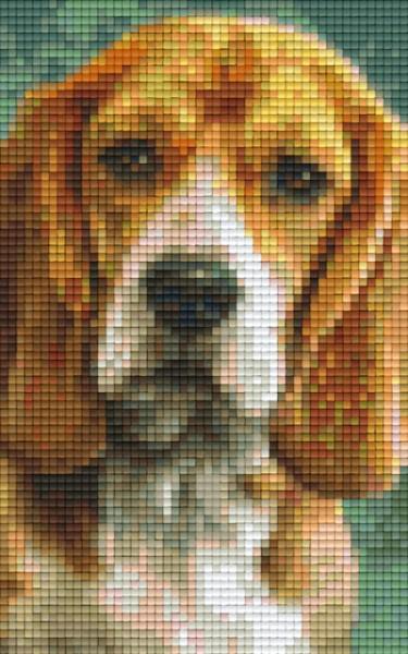 px802092_Pixelset-Beagle