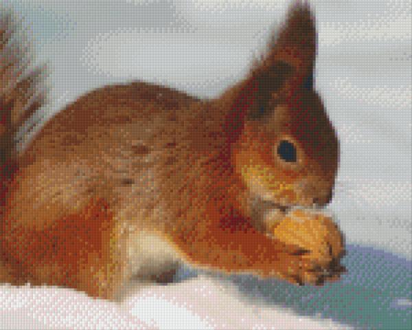 Set Eichhörnchen 2