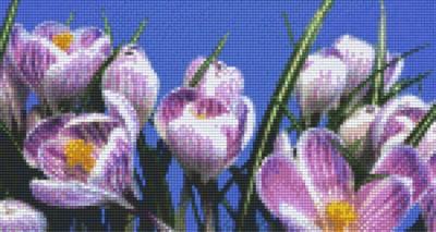806169 Pixelhobby Set Narzissen 2 mit 6 Platten