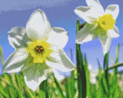 px809389_Pixelset-Narzissen