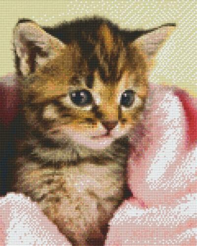 809449_Pixelset-Babykatze